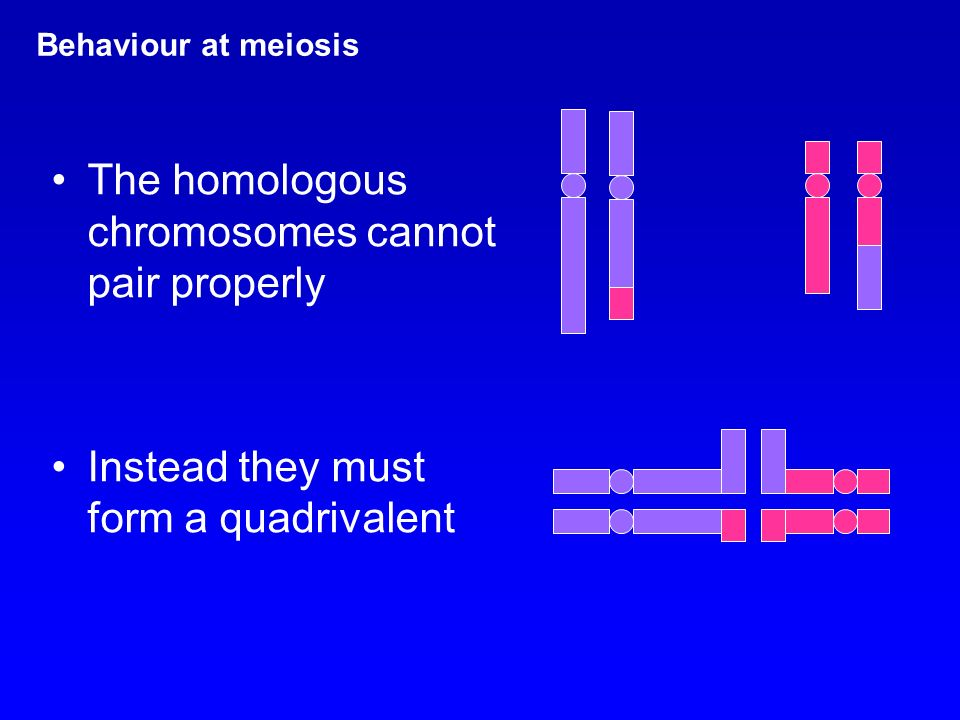 The homologous chromosomes cannot pair properly