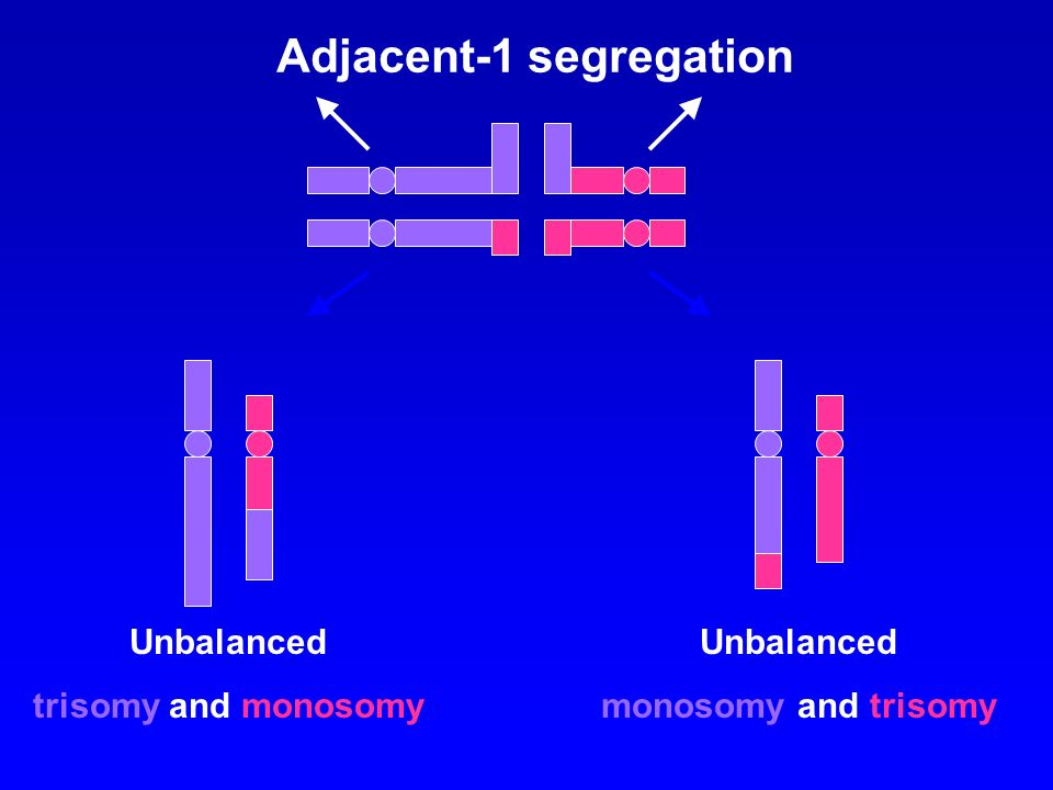 Adjacent-1 segregation