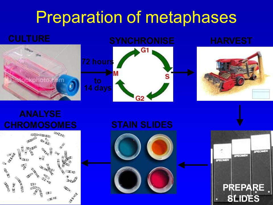 Preparation of metaphases