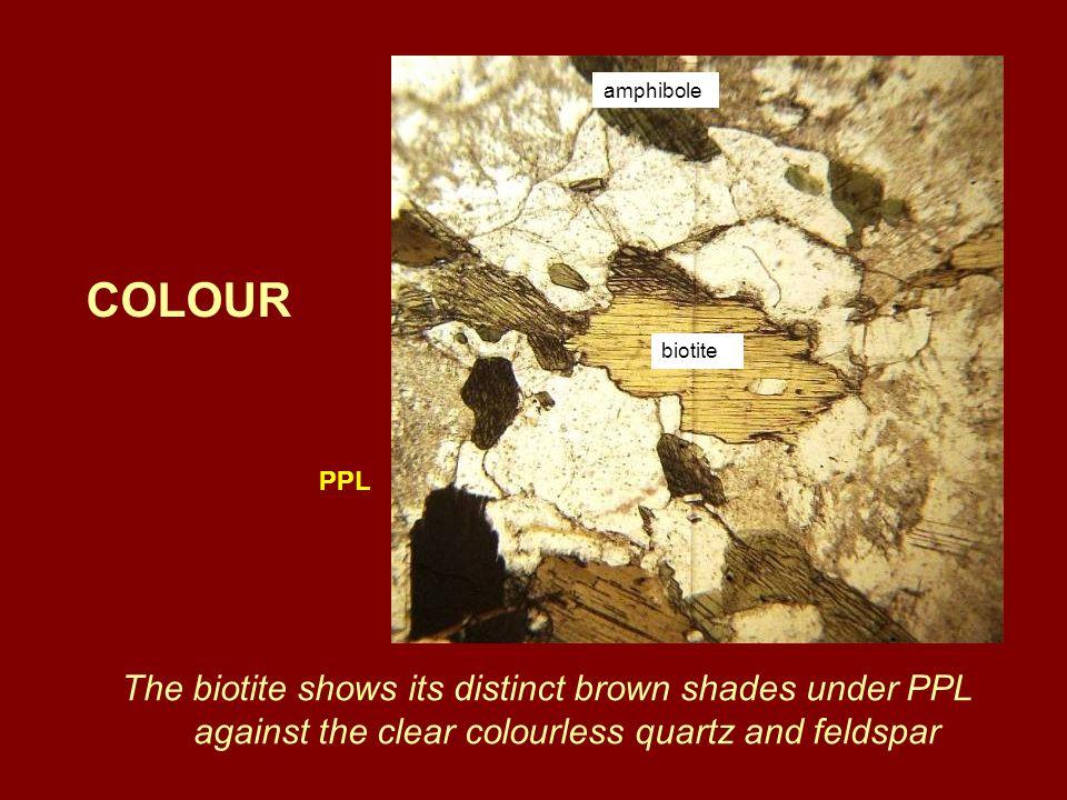 amphibole COLOUR. biotite. PPL.