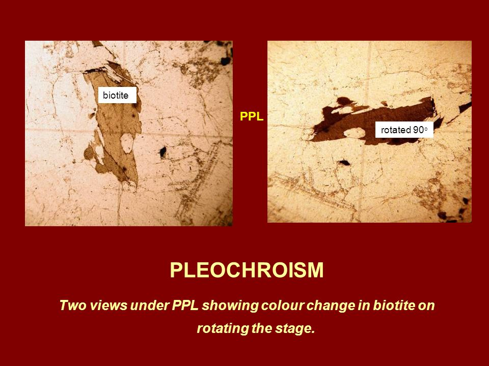 biotite PPL. rotated 90o. PLEOCHROISM.