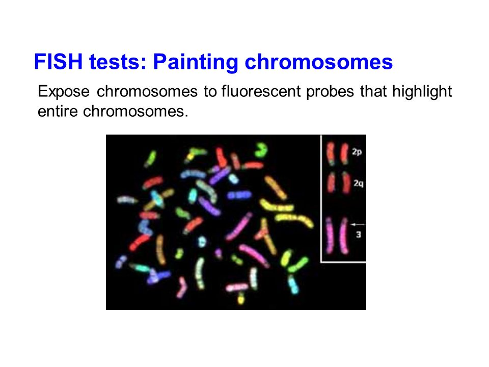 FISH tests: Painting chromosomes