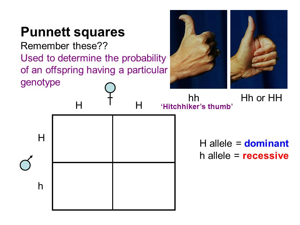 Punnett squares Remember these Used to determine the probability