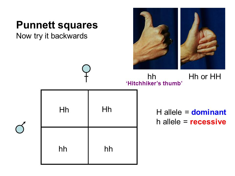 Punnett squares Now try it backwards hh Hh or HH Hh Hh