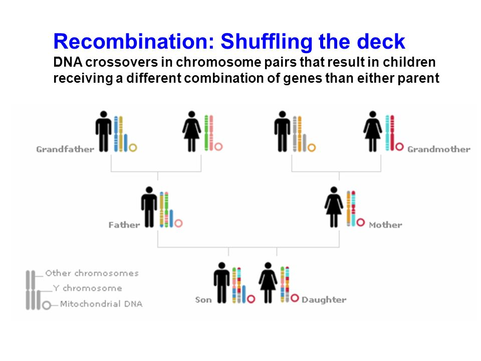 Recombination: Shuffling the deck