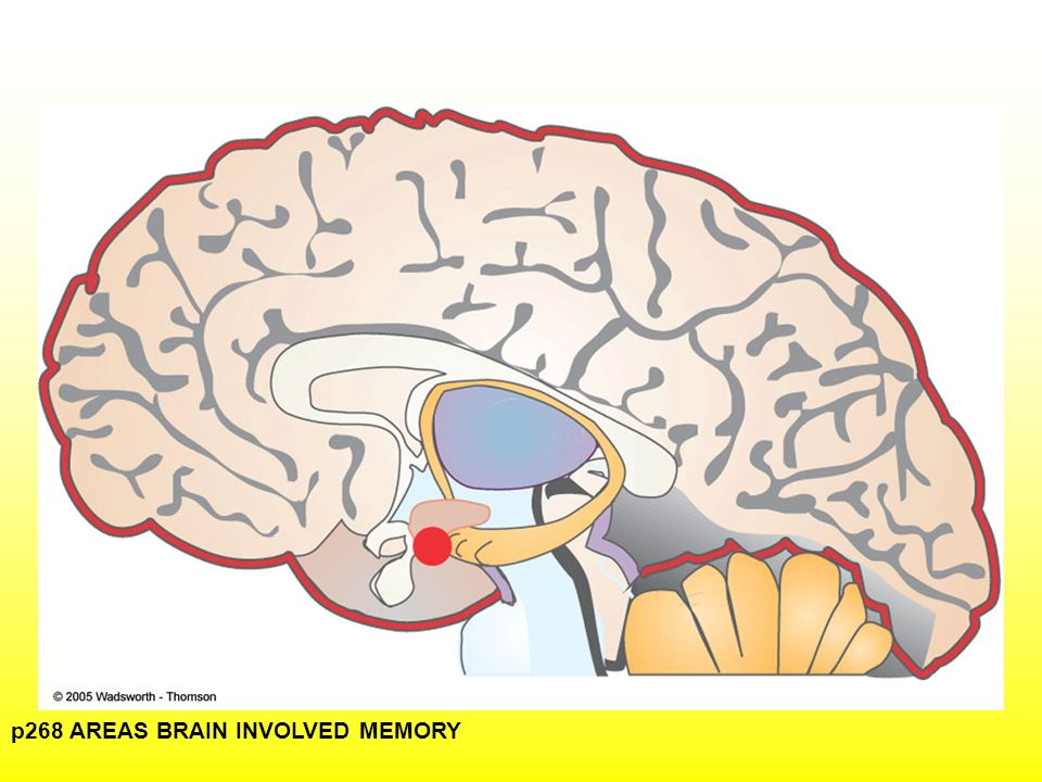 Remembering forgetting ppt video online download 17 p268 areas brain involved memory ccuart Images