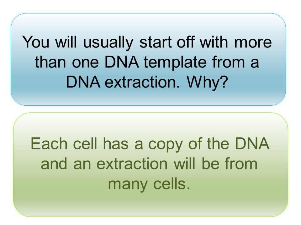You will usually start off with more than one DNA template from a DNA extraction. Why