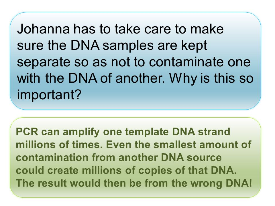 Johanna has to take care to make sure the DNA samples are kept separate so as not to contaminate one with the DNA of another. Why is this so important