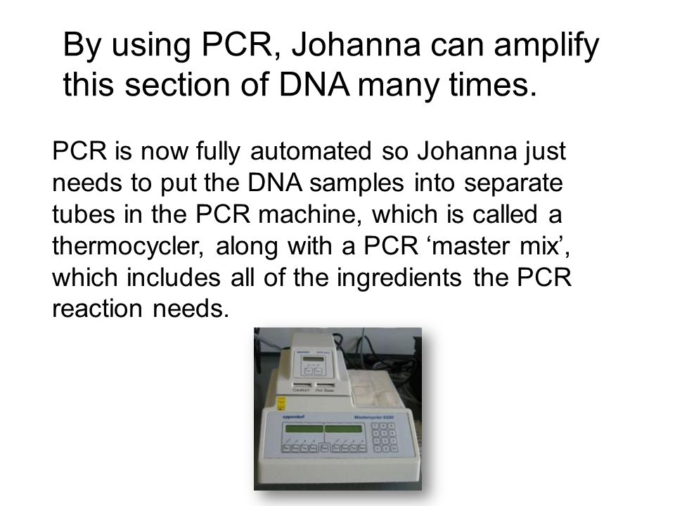 By using PCR, Johanna can amplify this section of DNA many times.