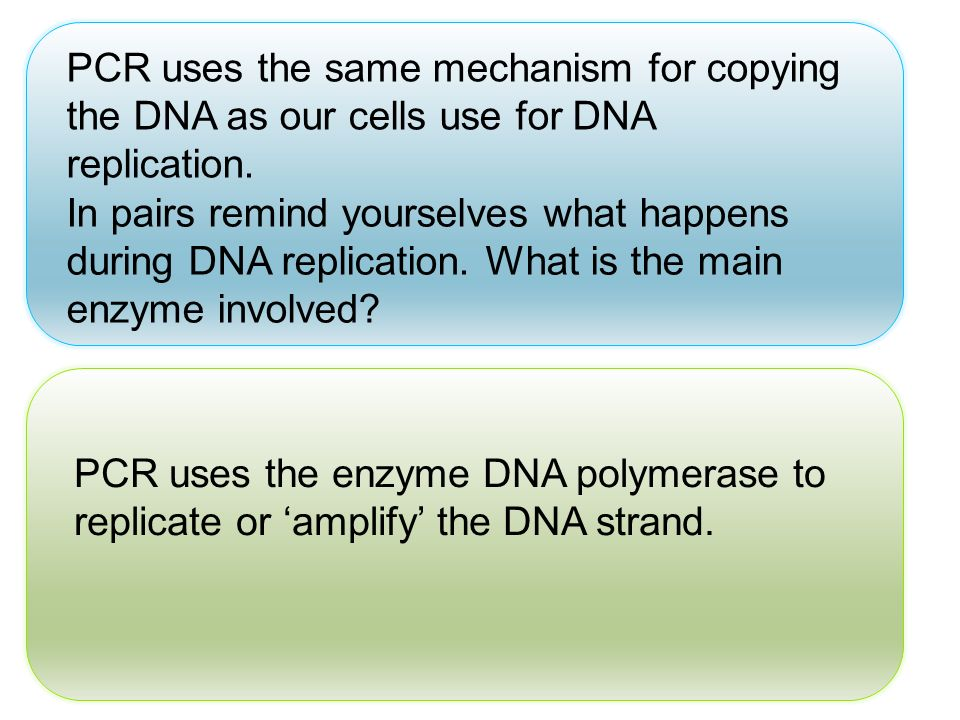 PCR uses the same mechanism for copying the DNA as our cells use for DNA replication.