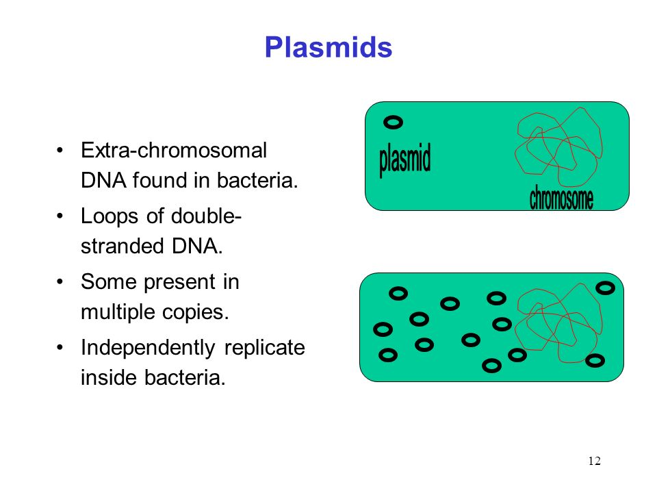 Plasmids Extra-chromosomal DNA found in bacteria.