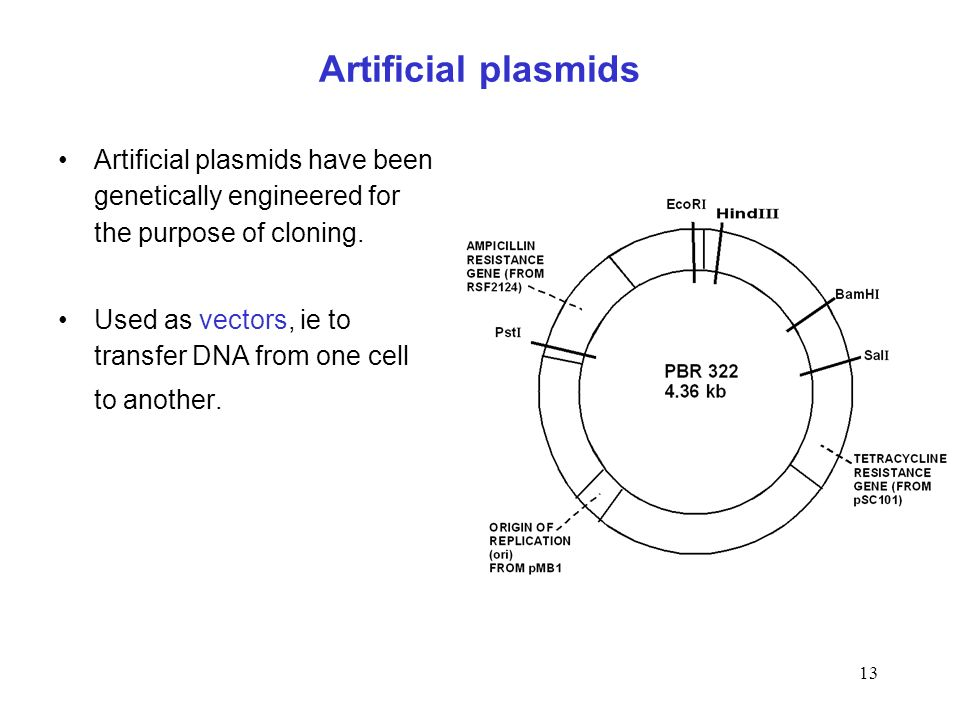 Artificial plasmids Artificial plasmids have been genetically engineered for the purpose of cloning.