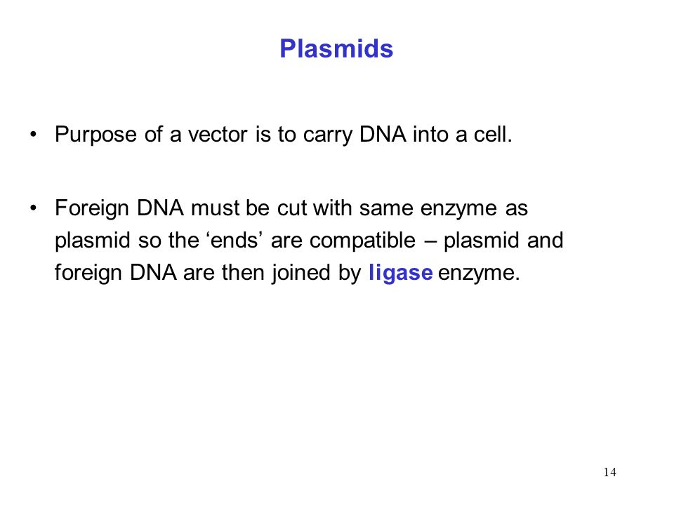 Plasmids Purpose of a vector is to carry DNA into a cell.