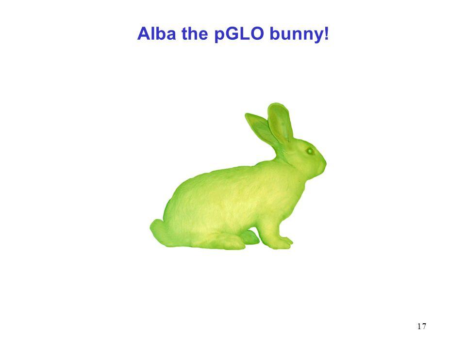 Alba the pGLO bunny!
