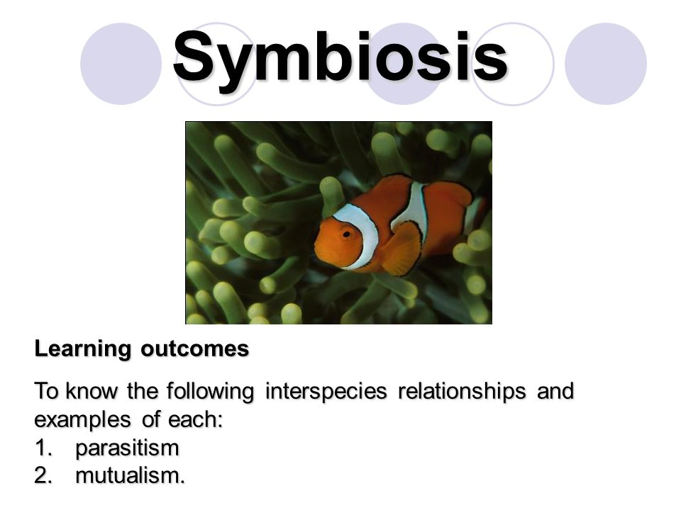 Symbiosis Learning outcomes