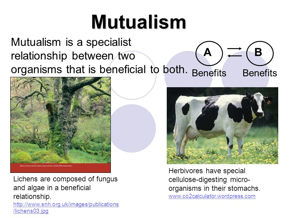Mutualism Mutualism is a specialist relationship between two organisms that is beneficial to both. A.