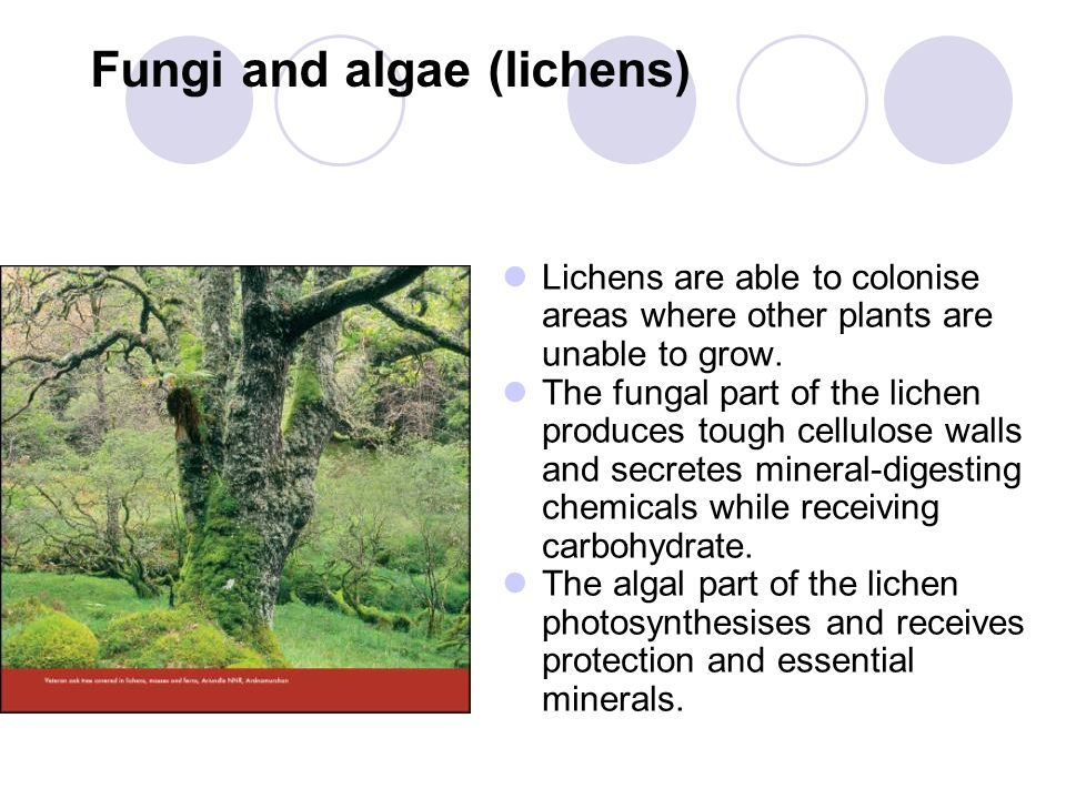 Fungi and algae (lichens)