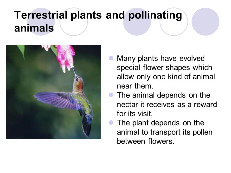 Terrestrial plants and pollinating animals