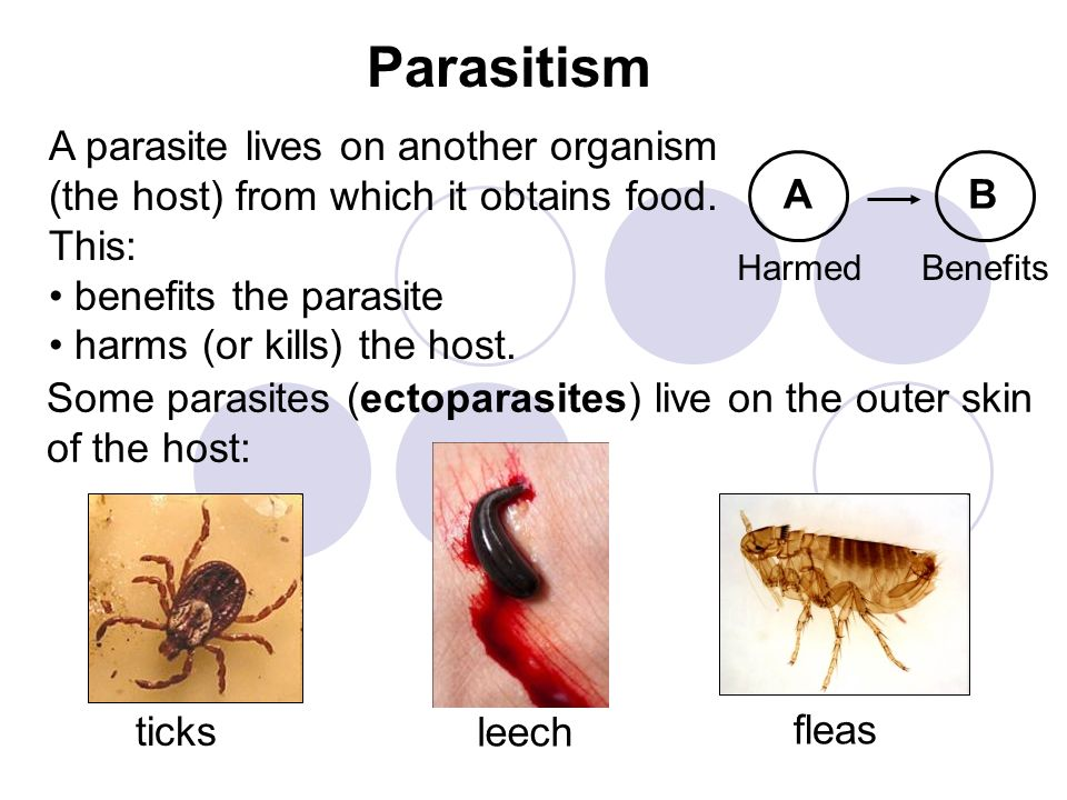 Parasitism A parasite lives on another organism (the host) from which it obtains food. This: benefits the parasite.