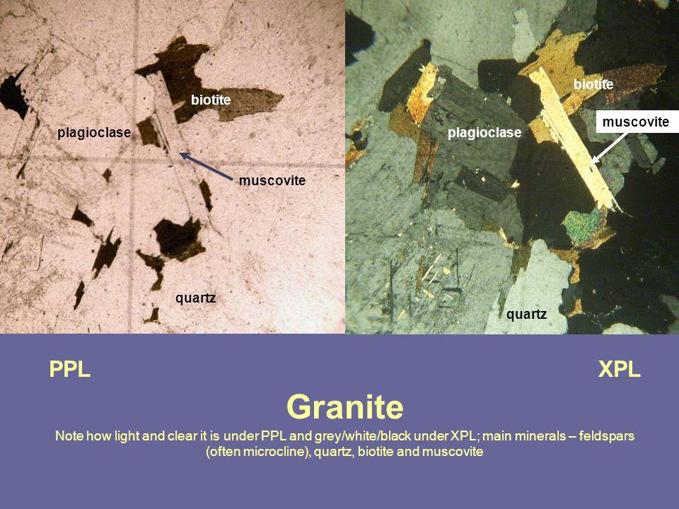 biotite biotite. muscovite. plagioclase. plagioclase. muscovite. quartz. quartz.