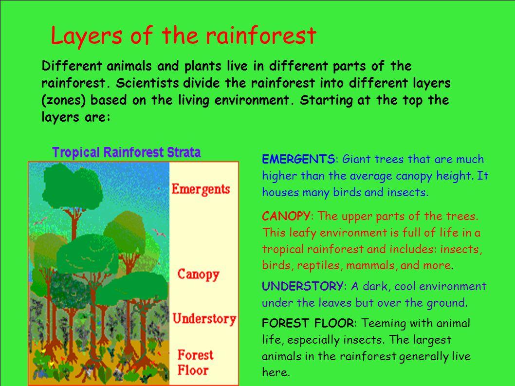 Rainforests As Habitats Ppt Download