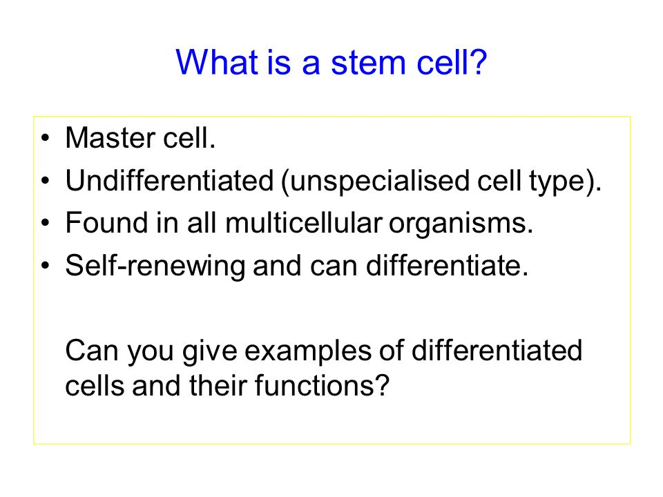 What is a stem cell Master cell.
