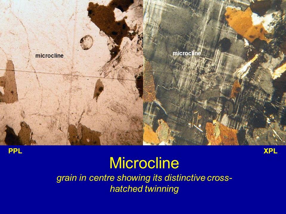 microcline microcline. PPL. XPL.