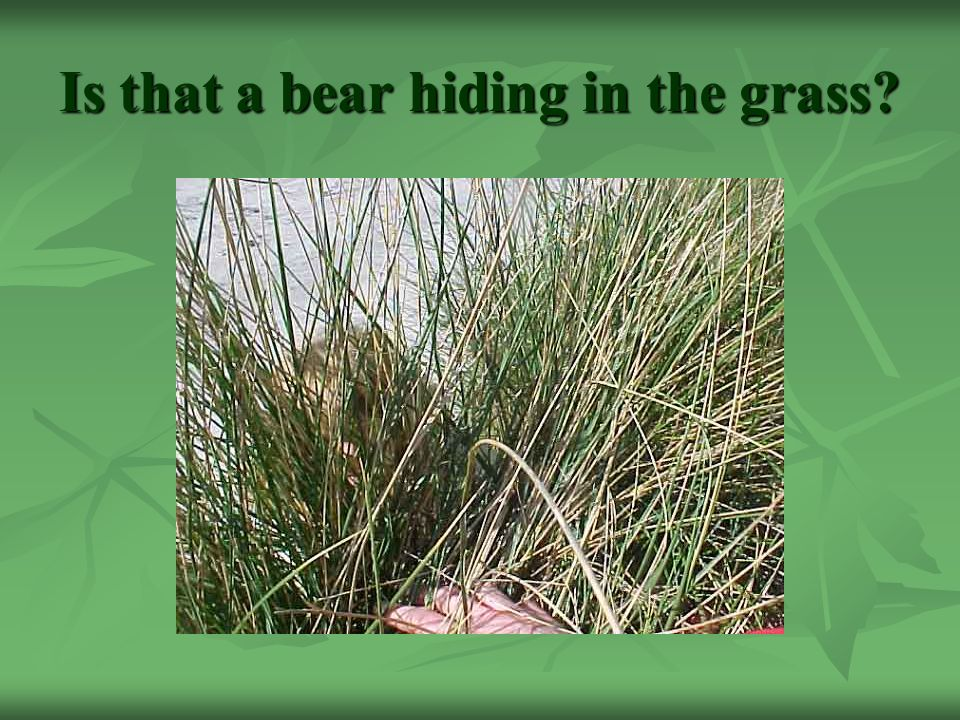 Is that a bear hiding in the grass