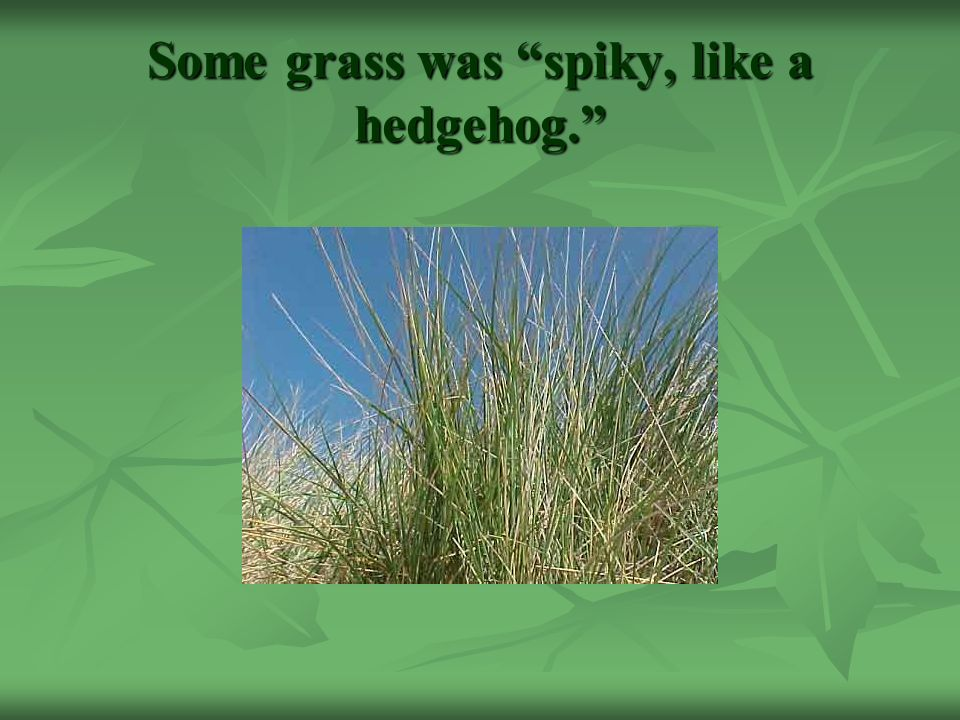 Some grass was spiky, like a hedgehog.