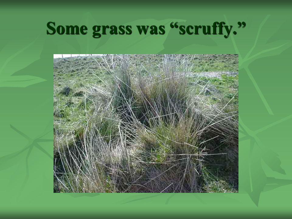 Some grass was scruffy.