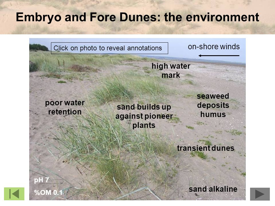 Embryo and Fore Dunes: the environment