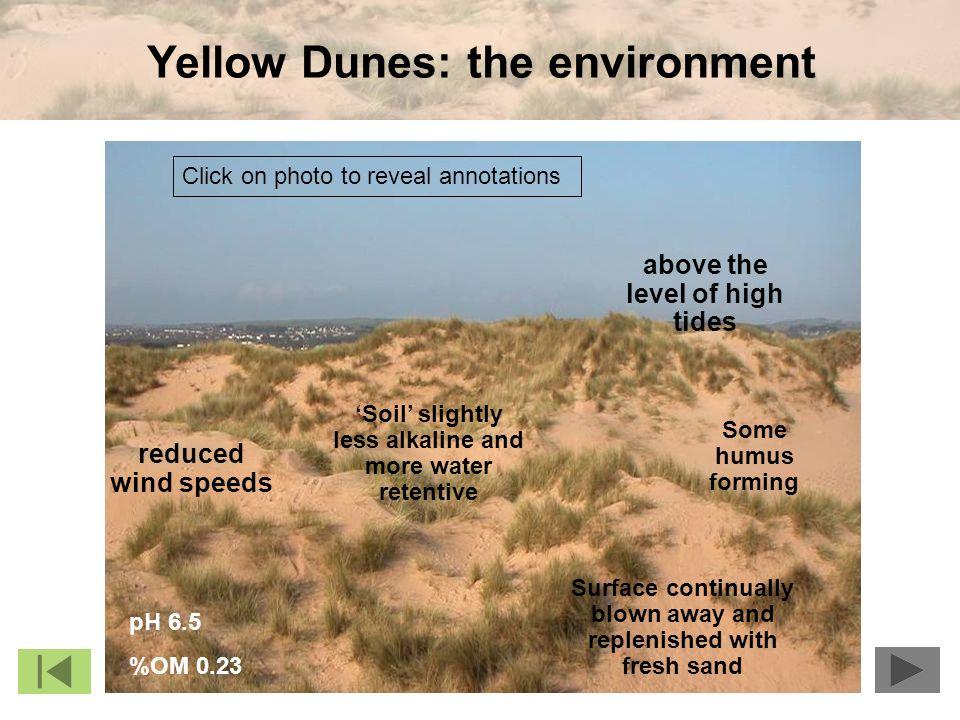 Yellow Dunes: the environment