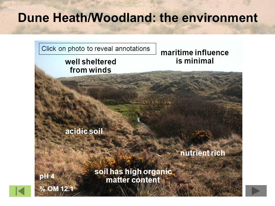 Dune Heath/Woodland: the environment