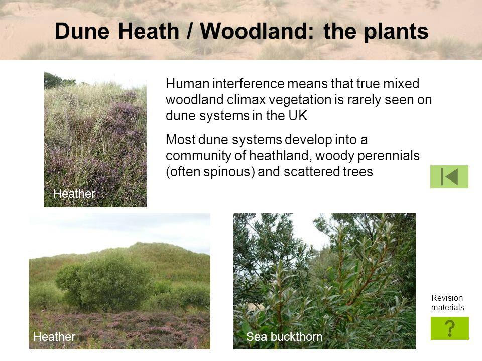 Dune Heath / Woodland: the plants