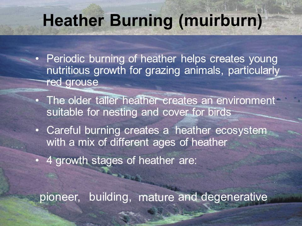 Heather Burning (muirburn)