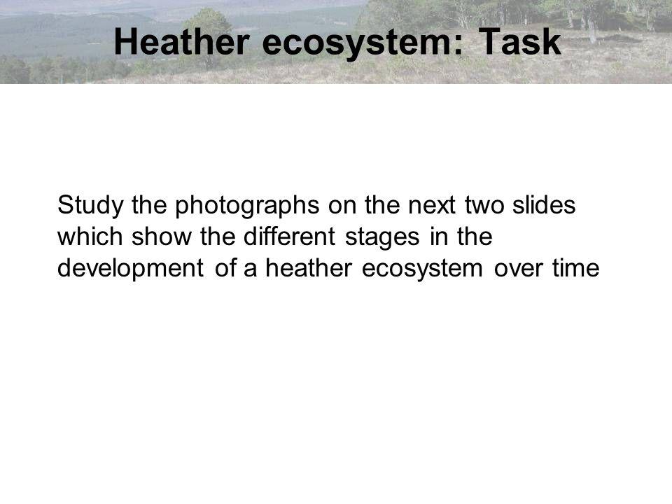 Heather ecosystem: Task