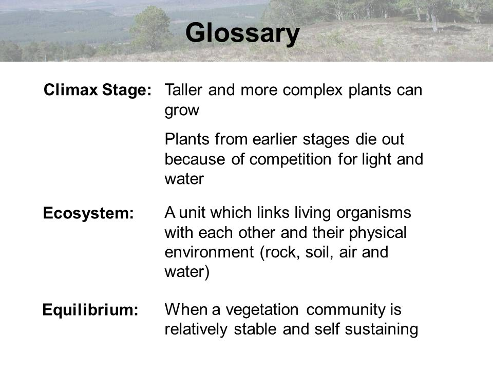 Glossary Climax Stage: Taller and more complex plants can grow