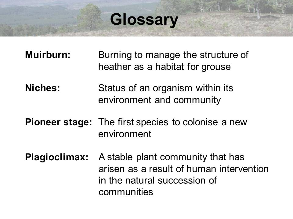 Glossary Muirburn: Burning to manage the structure of heather as a habitat for grouse. Niches: