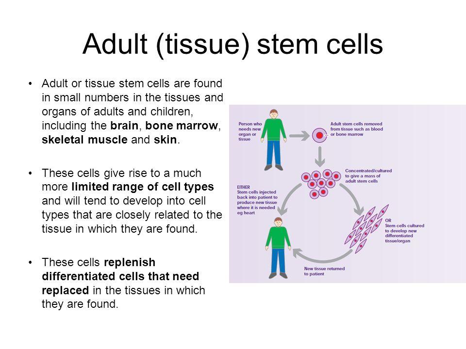 Adult (tissue) stem cells