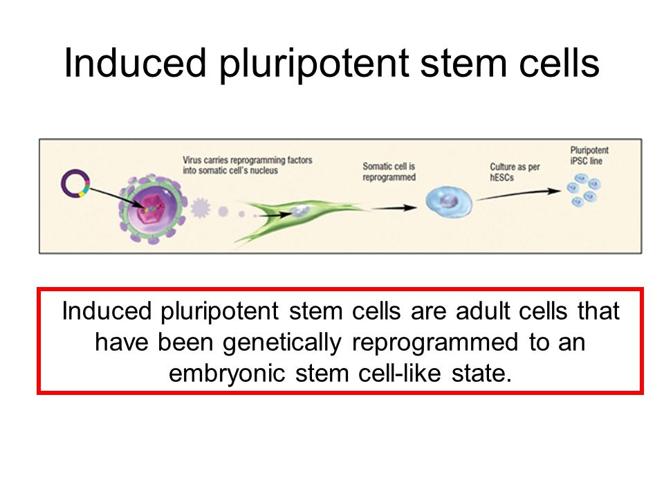 Higher Human Biology Human Cell Types. - ppt video online ...