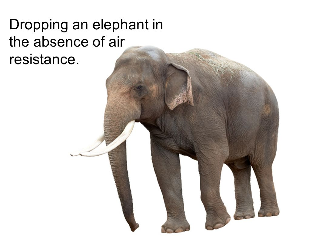 Dropping an elephant in the absence of air resistance.