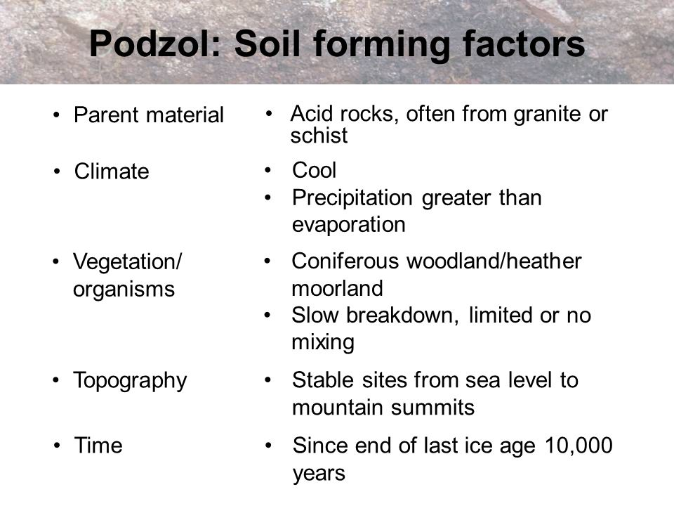 Podzol: Soil forming factors