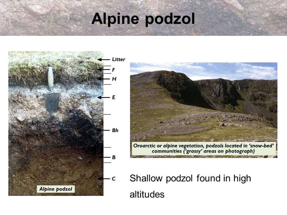 Alpine podzol Shallow podzol found in high altitudes