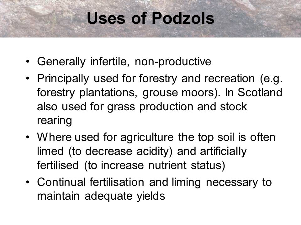 Uses of Podzols Generally infertile, non-productive