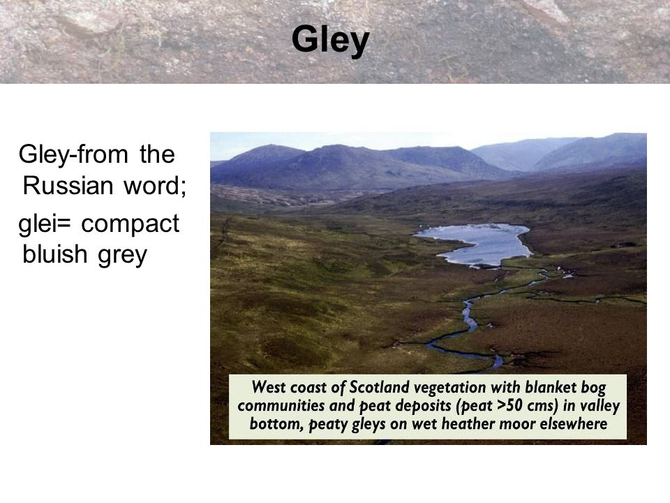 Gley Gley-from the Russian word; glei= compact bluish grey