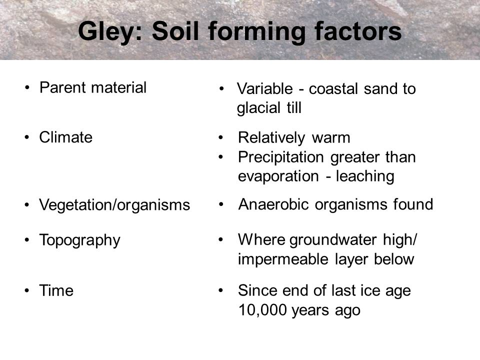 Gley: Soil forming factors