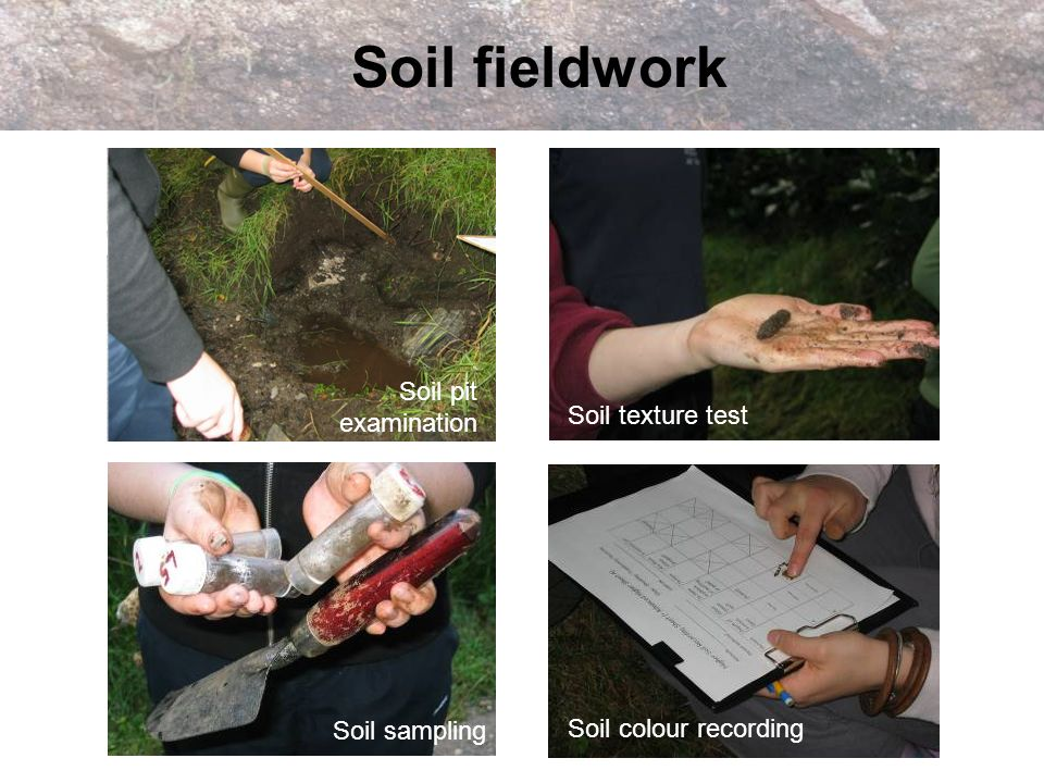 Soil fieldwork Soil pit examination Soil texture test Soil sampling