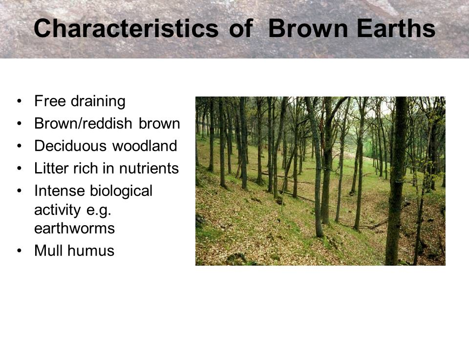 Characteristics of Brown Earths