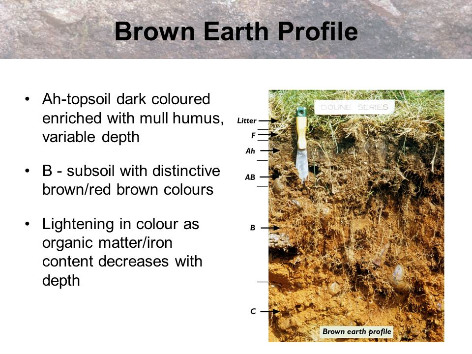 Brown Earth Profile Ah-topsoil dark coloured enriched with mull humus, variable depth. B - subsoil with distinctive brown/red brown colours.