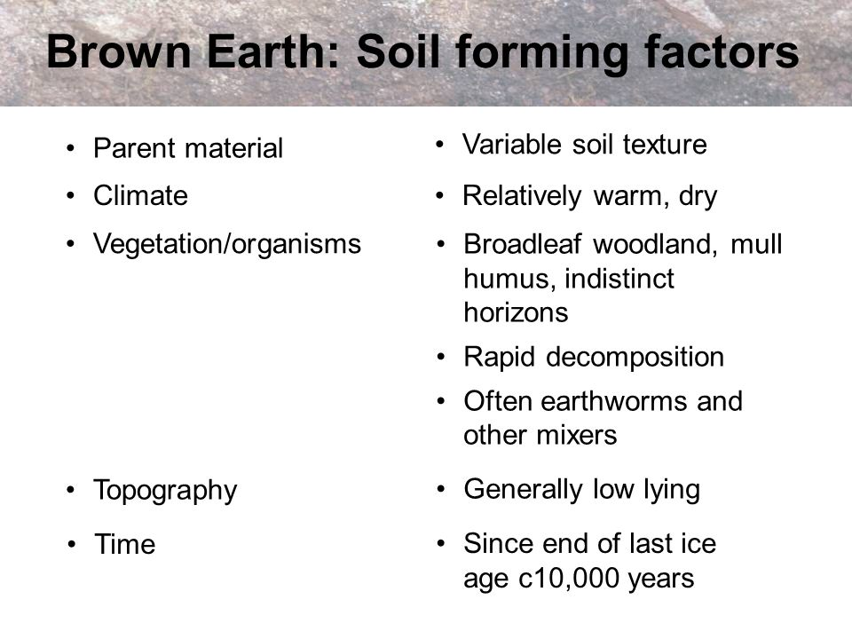Brown Earth: Soil forming factors